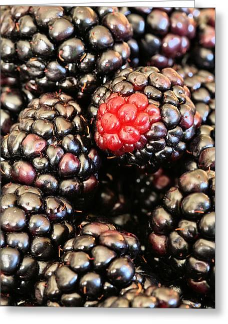 Black Berries Greeting Cards - Blackberries  Greeting Card by JC Findley