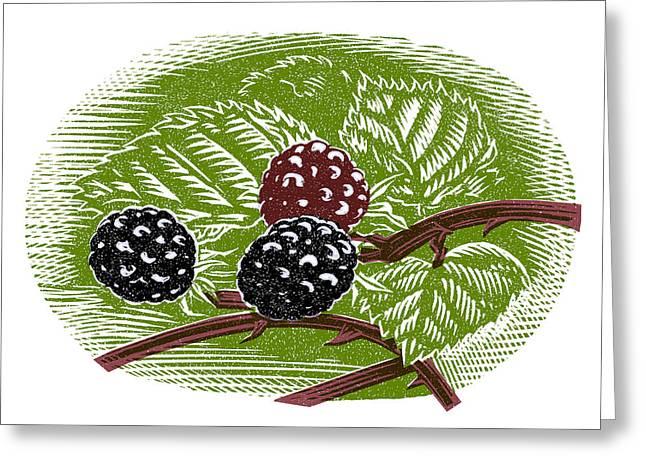 Linocut Greeting Cards - Blackberries, Woodcut Greeting Card by Gary Hincks