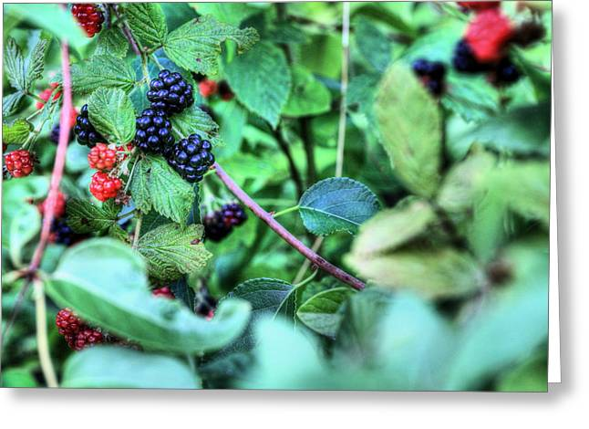Black Berries Photographs Greeting Cards - Blackberry  Greeting Card by JC Findley