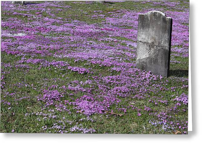 Final Resting Place Greeting Cards - Blank Colonial Tombstone Amidst Graveyard Phlox Greeting Card by John Stephens