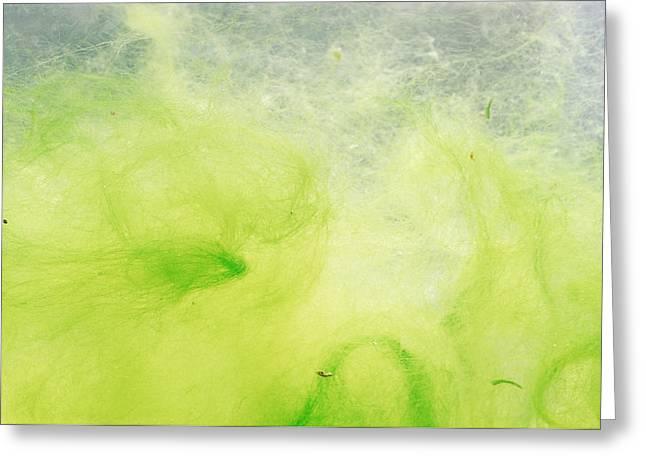 Algal Bloom Greeting Cards - Blanket Weed Greeting Card by David Aubrey
