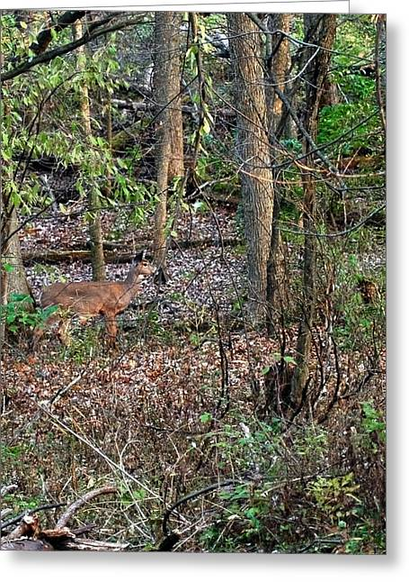Nature Center Pond Greeting Cards - Blending Deer Greeting Card by LeeAnn McLaneGoetz McLaneGoetzStudioLLCcom