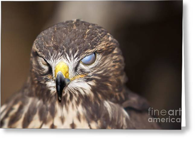 Blind Eyes Greeting Cards - Blind Buzzard Greeting Card by Michal Boubin