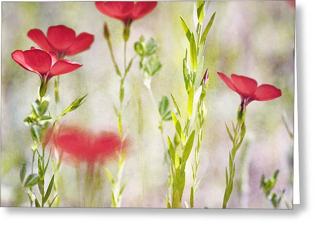 Texture Greeting Cards - Bliss Kiss Greeting Card by Joel Olives