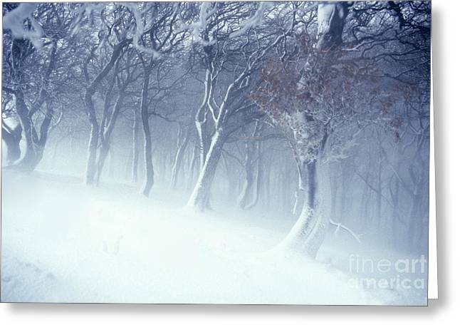 Drifting Snow Greeting Cards - Blizzard Greeting Card by Geoff Shoults