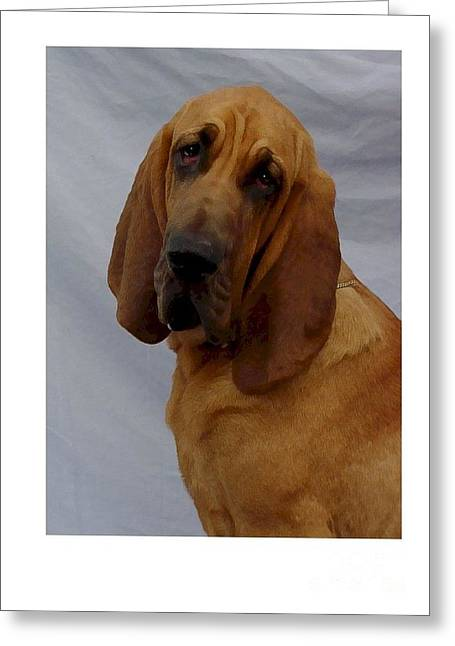Blood Hounds Greeting Cards - Bloodhound 269 Greeting Card by Larry Matthews