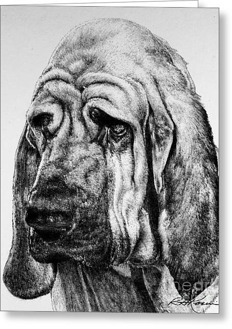 Kaelin Drawings Greeting Cards - Bloodhound Greeting Card by Roy Kaelin