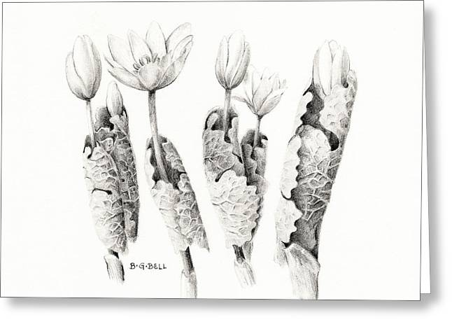 Bloodroot Greeting Cards - Bloodroot Group Greeting Card by Betsy Gray