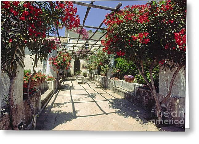 Trellis Greeting Cards - Bloom in a Villa Garden Greeting Card by George Oze