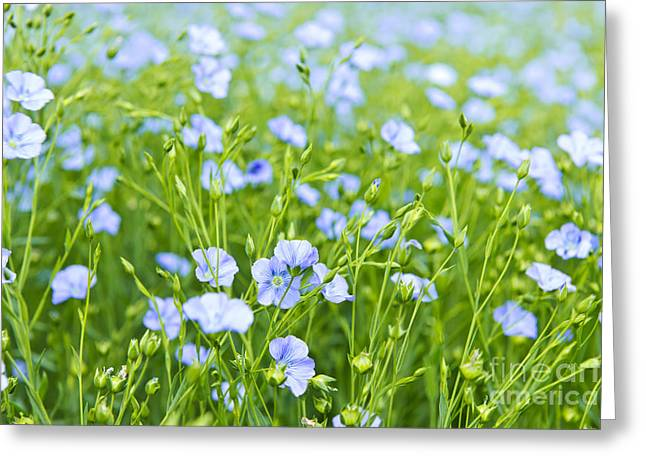 Flowering Greeting Cards - Blooming flax Greeting Card by Elena Elisseeva