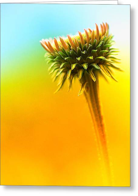 Abstract Flower Photo Greeting Cards - Blooming Flower Greeting Card by Susan Stone