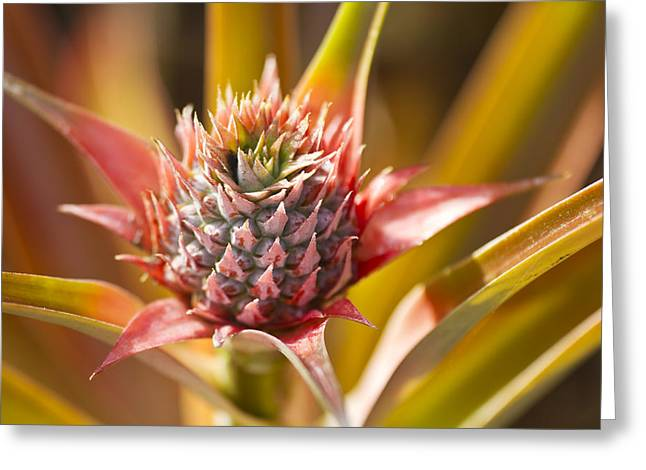 Fruit Tree Art Greeting Cards - Blooming Pineapple II Greeting Card by Ron Dahlquist