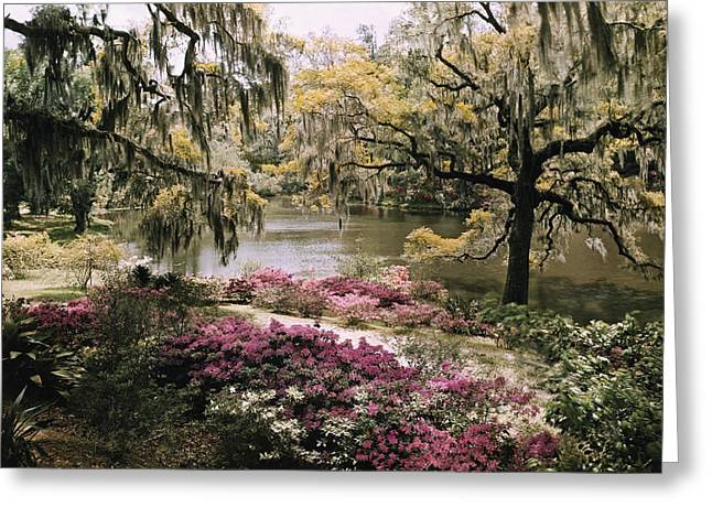 Middleton Greeting Cards - Blooming Shrubs And Trees Greeting Card by B. Anthony Stewart