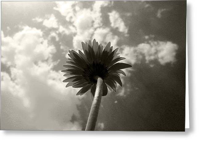 Blooming To The Sky Greeting Card by Sumit Mehndiratta