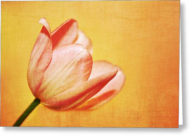 Oregon Flowers Greeting Cards - Blooming Tulip Greeting Card by Cathie Tyler