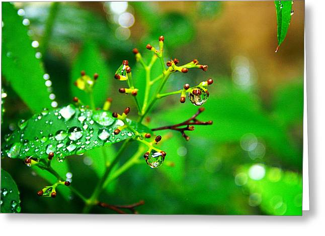 Rain Droplet Photographs Greeting Cards - Bloomless Greeting Card by Toni Hopper