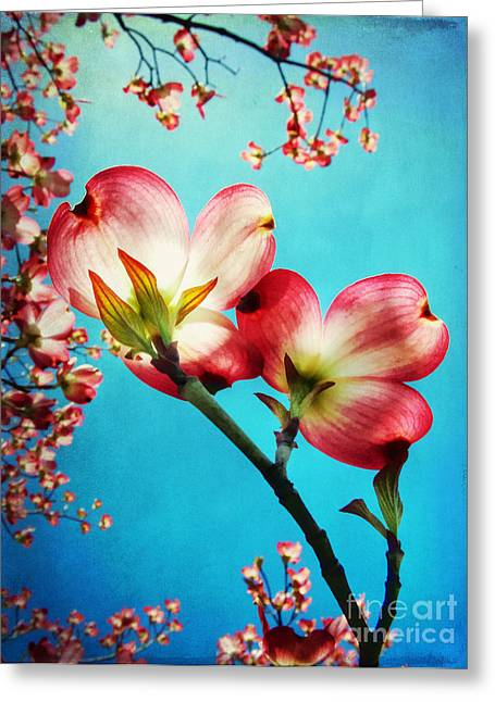 Close Focus Floral Greeting Cards - Blooms of the Dogwood Greeting Card by Darren Fisher