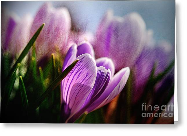 Crocus Flower Greeting Cards - Blossom By Blossom Greeting Card by Lois Bryan