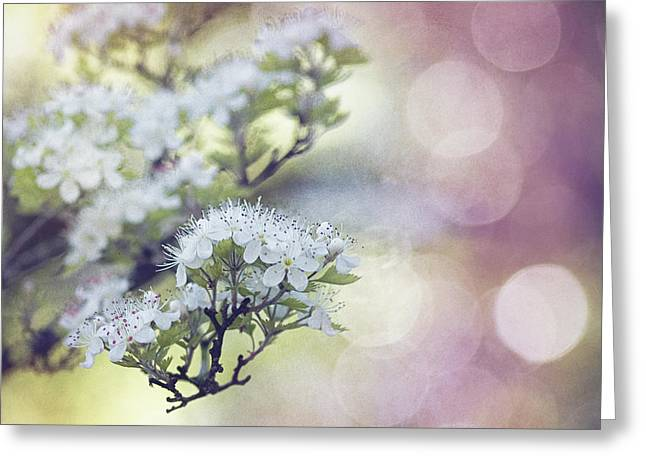 Blossom Greeting Card by Joel Olives