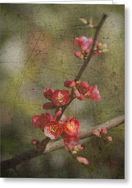 Pink Blossoms Greeting Cards - Blossoms Greeting Card by Rebecca Cozart
