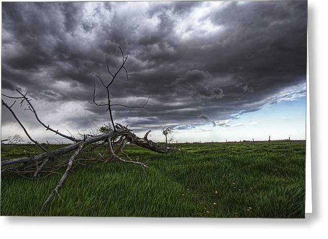 Jul08 Greeting Cards - Blowing Grass And Deadwood Greeting Card by Dan Jurak