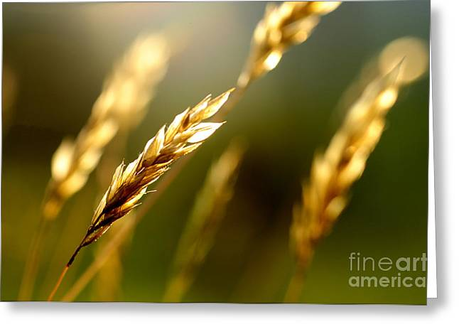 Balance In Life Greeting Cards - Blowing in the Wind Greeting Card by Thomas R Fletcher