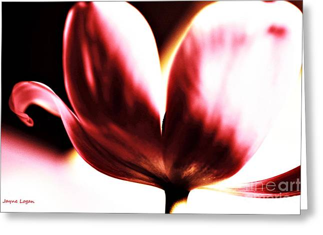 Card For Photographer Greeting Cards - Blowing Kisses Tulip Greeting Card by Jayne Logan Intveld