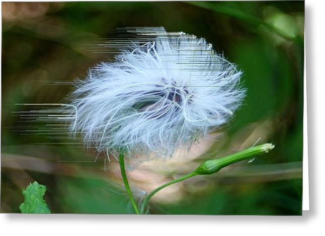 Breezy Greeting Cards - Blown Away Greeting Card by Barbara S Nickerson