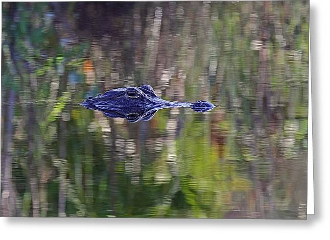 American Alligator Greeting Cards - Blue Alligator Greeting Card by Juergen Roth