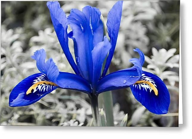 Blue Along Greeting Card by Svetlana Sewell