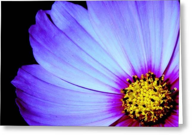 Petals Framed Prints Greeting Cards - Blue Awakening Greeting Card by Tam Graff