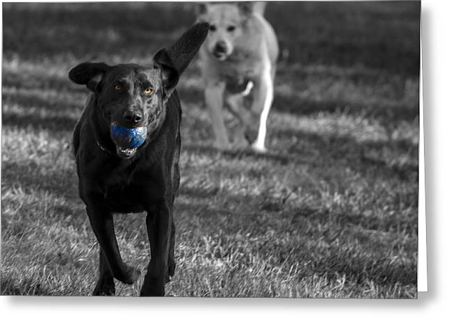 Dog Playing Ball Greeting Cards - Blue Ball Greeting Card by Jean Noren