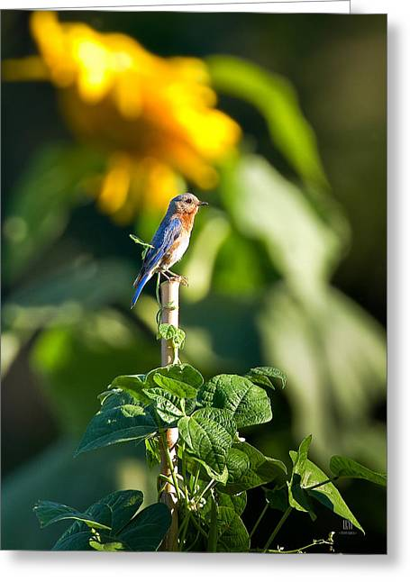 Green Beans Greeting Cards - Blue Bird on the Bean Stalk Greeting Card by Steven Llorca