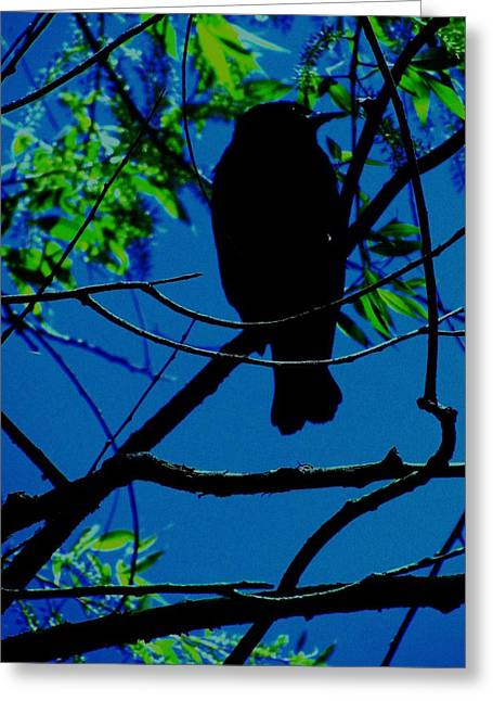 Todd Sherlock Greeting Cards - Blue-Black-Bird Greeting Card by Todd Sherlock