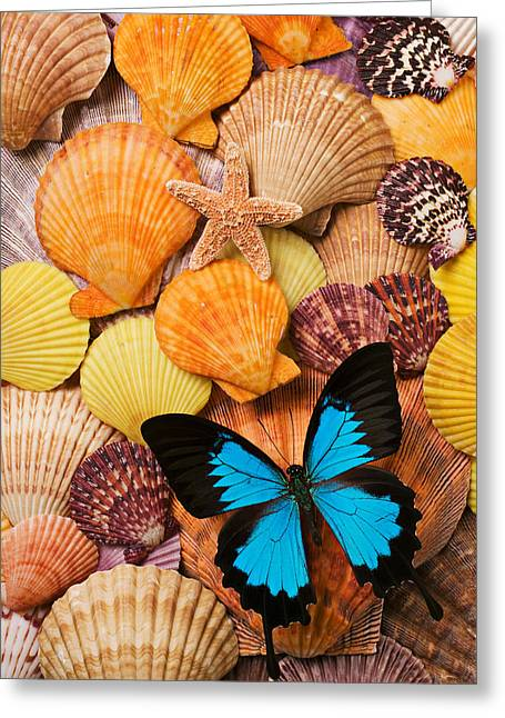 Aquatic Greeting Cards - Blue butterfly and sea shells Greeting Card by Garry Gay