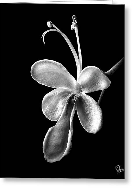 Flower Photos Greeting Cards - Blue Butterfly in Black and White Greeting Card by Endre Balogh