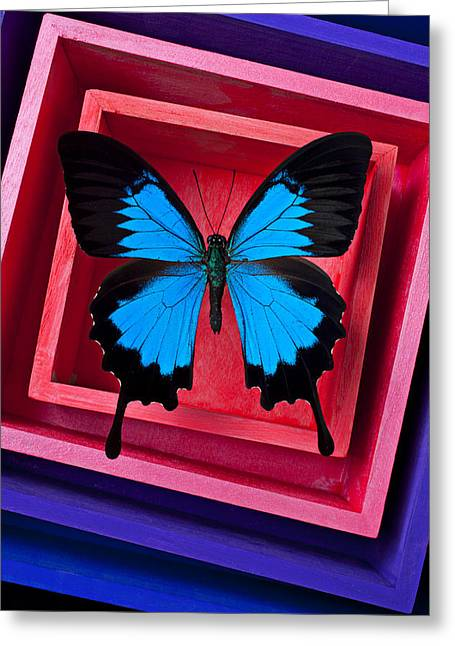 Blue Butterfly Greeting Cards - Blue Butterfly In Pink Box Greeting Card by Garry Gay