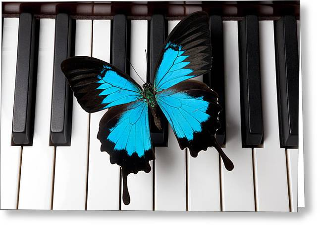 Blue Butterfly Greeting Cards - Blue butterfly on piano keys Greeting Card by Garry Gay