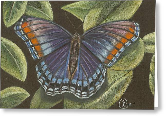 Blue Butterfly  Greeting Card by Stephanie L Carr