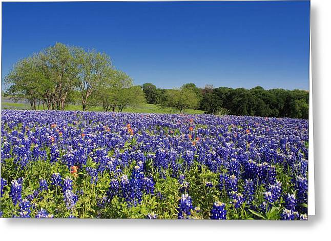 Lynnette Johns Greeting Cards - Blue By You Greeting Card by Lynnette Johns