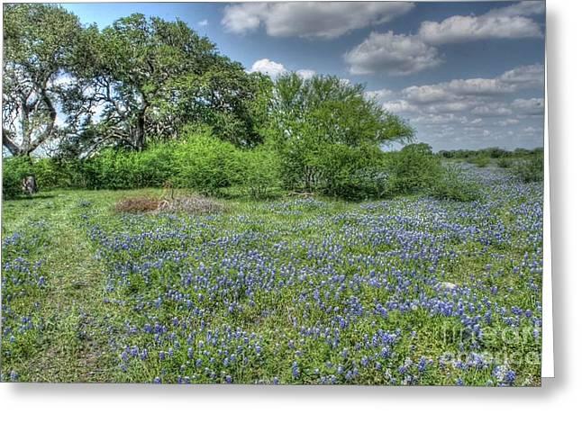 Blue Creek Greeting Card by Will Cardoso