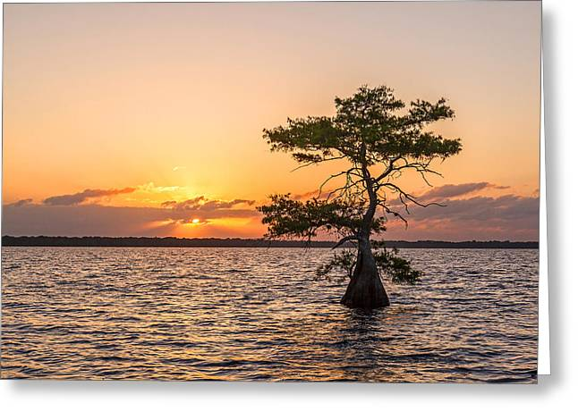 Claudia Domenig Greeting Cards - Blue Cypress Lake Sunrise Greeting Card by Claudia Domenig