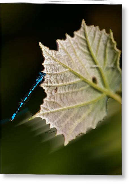 Black Olives Greeting Cards - Blue Damsel on Leaf Greeting Card by DigiArt Diaries by Vicky B Fuller