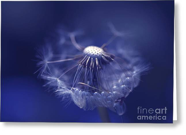 Dandelion Digital Art Greeting Cards - Blue Dandy Greeting Card by Sharon  Talson