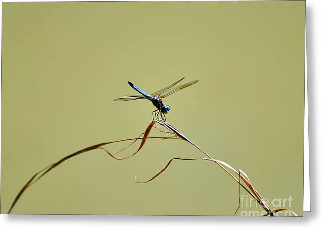 Dragon Fly Photo Greeting Cards - Blue Dasher Dragonfly Greeting Card by Al Powell Photography USA