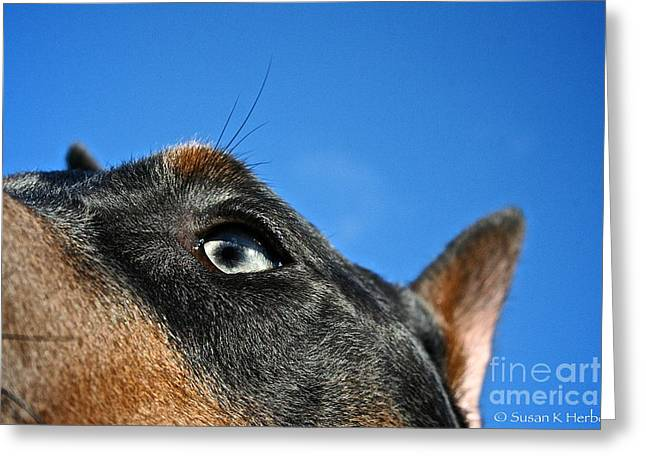 Working Dog Greeting Cards - Blue Doberman Pinscher Greeting Card by Susan Herber