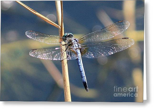 Sparkly Greeting Cards - Blue Dragonfly Greeting Card by Carol Groenen