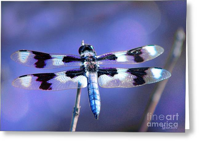 Dragon Flies Photographs Greeting Cards - Blue Dragonfly Greeting Card by Nick Gustafson
