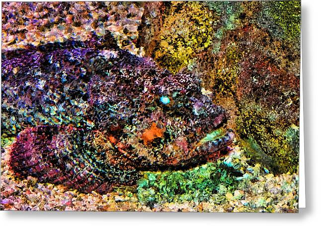 Aquarium Fish Greeting Cards - Blue Eyed Fish Greeting Card by Jeff Breiman