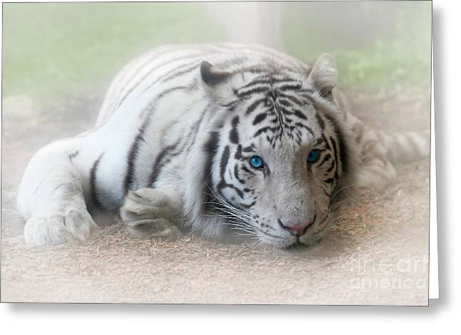 Mesmerizing Greeting Cards - Blue Eyes Greeting Card by Jeannie Burleson